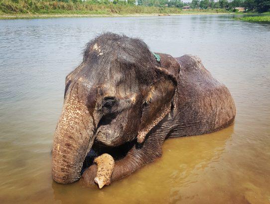 Jour 6 - À la rencontre des éléphants